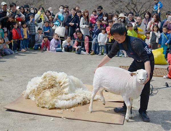 春はこどもの国で遊ぼう!「桜と羊のフェスティバル」や「自然スタンプビンゴ」など(横浜市青葉区)