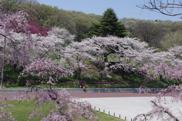春はこどもの国で遊ぼう!「桜と羊のフェスティバル」ほか(横浜市青葉区)