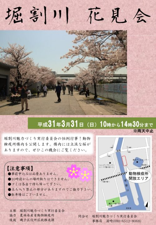 磯子で1日だけの桜名所見学「堀割川 花見会」3月31日@農林水産省動物検疫所