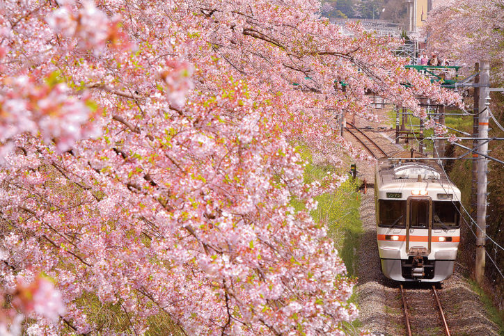 「かながわのまちなみ100選」山北の桜並木!やまきた桜まつり