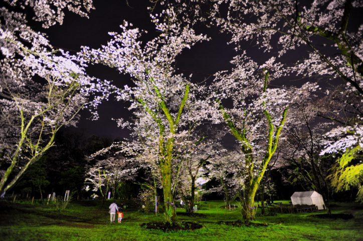 県央随一のお花見の名所で「あつぎ飯山桜まつり」