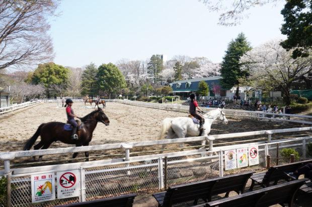 横浜・根岸の丘に馬ふれあいスポット「馬の博物館」。日本唯一、歴史も美術も馬づくし