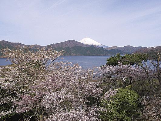 歴史と品格ある箱根の桜名所。離宮跡地に300本の桜と富士山の風景も@恩賜箱根公園