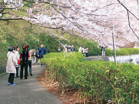 境内の桜並木を特別公開 横浜・日吉の「大聖院 観桜会」桜餅や甘酒ふるまいも