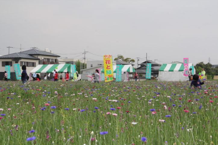 伊勢原で「レンゲまつり」花摘み自由!とん汁配布や地元グルメ・新鮮野菜販売も