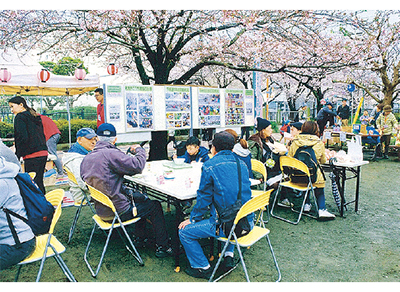 【鎌倉】砂押川沿いさくら祭り@岩瀬こい公園
