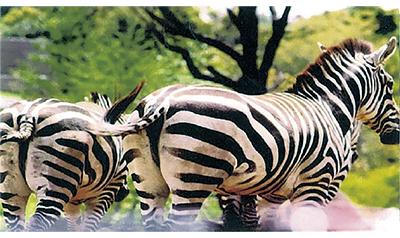 動物テーマに「第7回輝写クラブ写真展」
