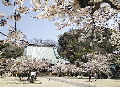 鎌倉・光明寺で『観桜会』フリマや特製「根幸(こんさい)カレー」出店も