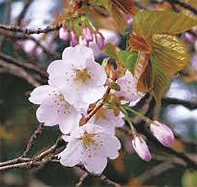 「金沢八景の自然と史跡を守る会」文化講演会、ハイキングも