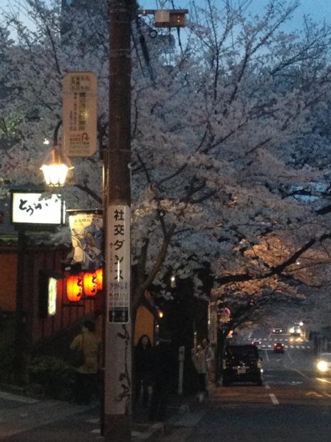 遅咲きの桜スポット鷺沼駅前「春待坂」さくらまつりも開催(東急田園都市線)