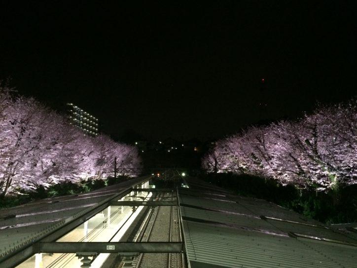 相鉄線の桜の名所、弥生台駅ライトアップ中!