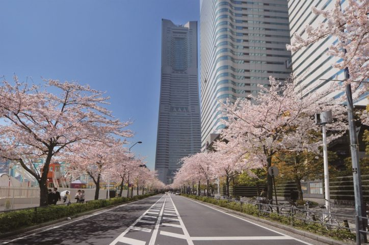 横浜・みなとみらい桜名所で「みなとみらい21さくらフェスタ2019」3月30日は歩行者天国に!