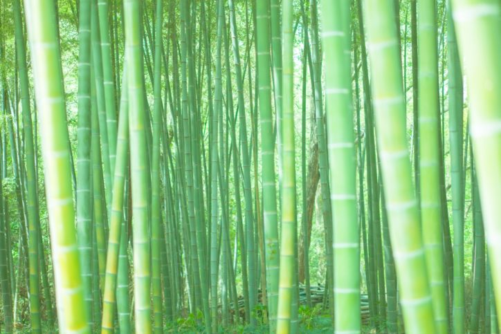 食器・おもちゃを竹で作る!秘密基地でおやつタイムも「わくわくドキドキ自然体験」@都筑民家園