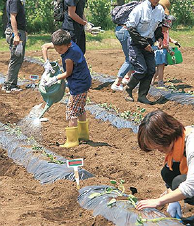 「親子サツマイモ作り隊」参加者を募集中!@県立秦野戸川公園