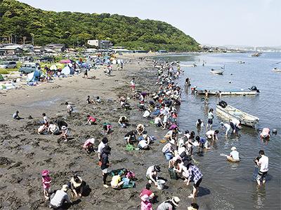 横須賀・走水海岸で潮干狩り解禁!東京湾のアサリを収穫しよう