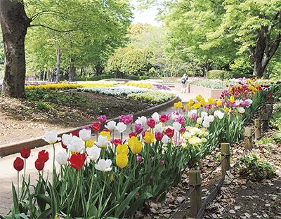 人気投票参加で花の種プレゼント!「秋植え球根フェスタ」@相模原公園