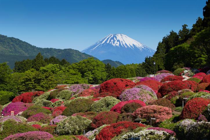 富士山望む箱根・芦ノ湖畔のホテル庭園で「つつじ・しゃくなげフェア」