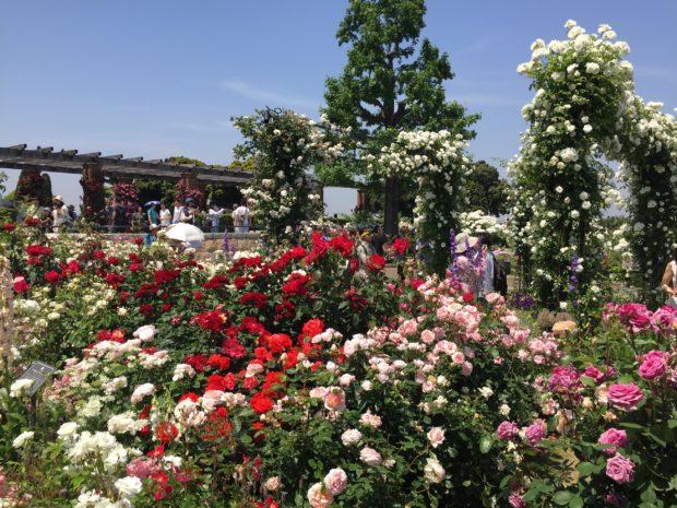 「ガーデンネックレス横浜2018」市内最大級の花壇にチューリップ、バラも!