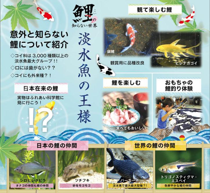 淡水魚の王様「鯉の知らない世界」生き物観察できるアクアリウムも@相模川ふれあい科学館
