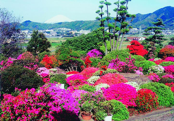 伊勢原で無料開放 50種以上・1000株のツツジと富士山のパノラマ絶景庭園【駐車場あり】