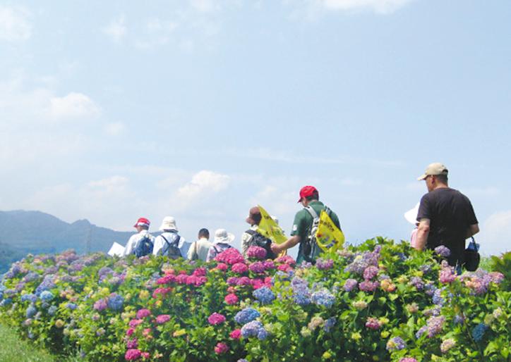 秦野で「つるまきあじさい遊歩道まつり」大山や富士山眺めながら川沿い散策
