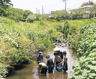 【参加者募集】草花や鳥、昆虫、魚を観察しよう「和泉川生きもの観察隊」