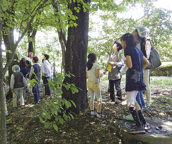 清々しい新緑を満喫しながら楽しめる「ネイチャーゲーム」@座間谷戸山公園