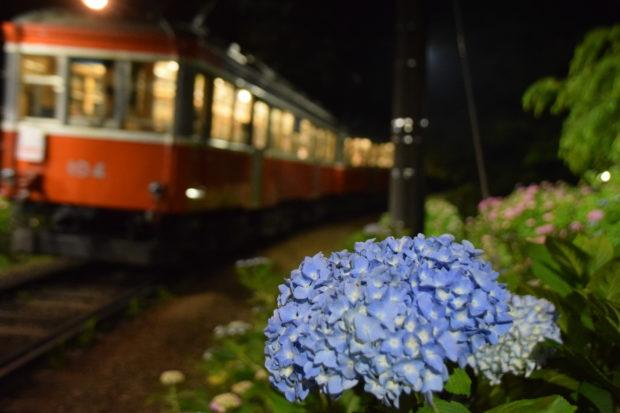 車窓から楽しむ箱根登山鉄道「あじさい電車」の旅 夜はライトアップで特別列車運行