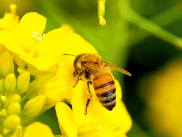 ミツバチと一緒に考えよう!青葉の環境【先着100人】 – レアリア