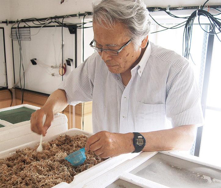 川崎・北加瀬の商店主が育てたホタル6000匹、子どもたちに。6月23日谷戸商店会で鑑賞会