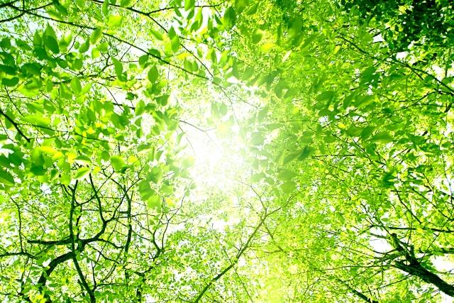 今年で最後の「夏の生活学校」@県立座間谷戸山公園【先着50人】