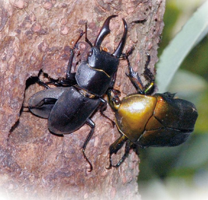 夏休みの思い出に!昆虫の面白い生態を知ろう「谷戸山いきもの展」参加無料@座間谷戸山公園