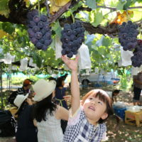 2021年も厚木で「梨&ぶどう狩り!」都心から1時間の神奈川名産地で家族ともぎとり体験【8月中旬~9月上旬】