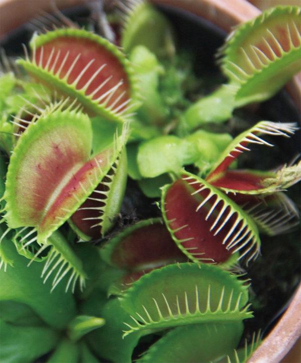 世界の食虫植物約30種を展示「食虫植物展」@大船フラワーセンター