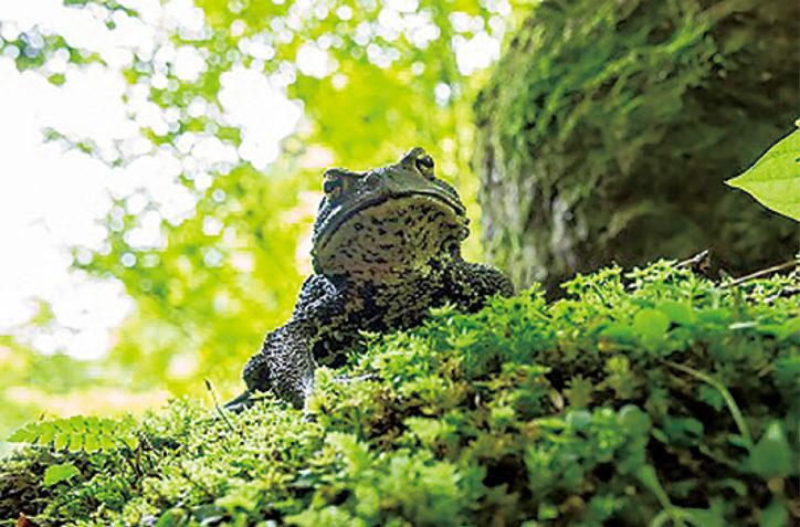 夏の特別展「里の生き物と日本のカエル」@県立相模原公園