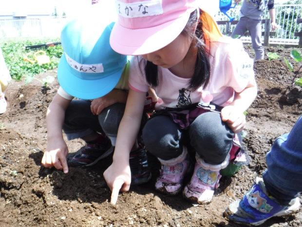 認定こども園厚木緑ヶ丘幼稚園/「子どもが主役」の園づくり【厚木市】