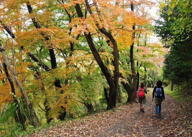 「ロゲイニング丹沢・大山」今年も開催!ヤビツ、塔ノ岳…秦野を巡ってプレゼントGET