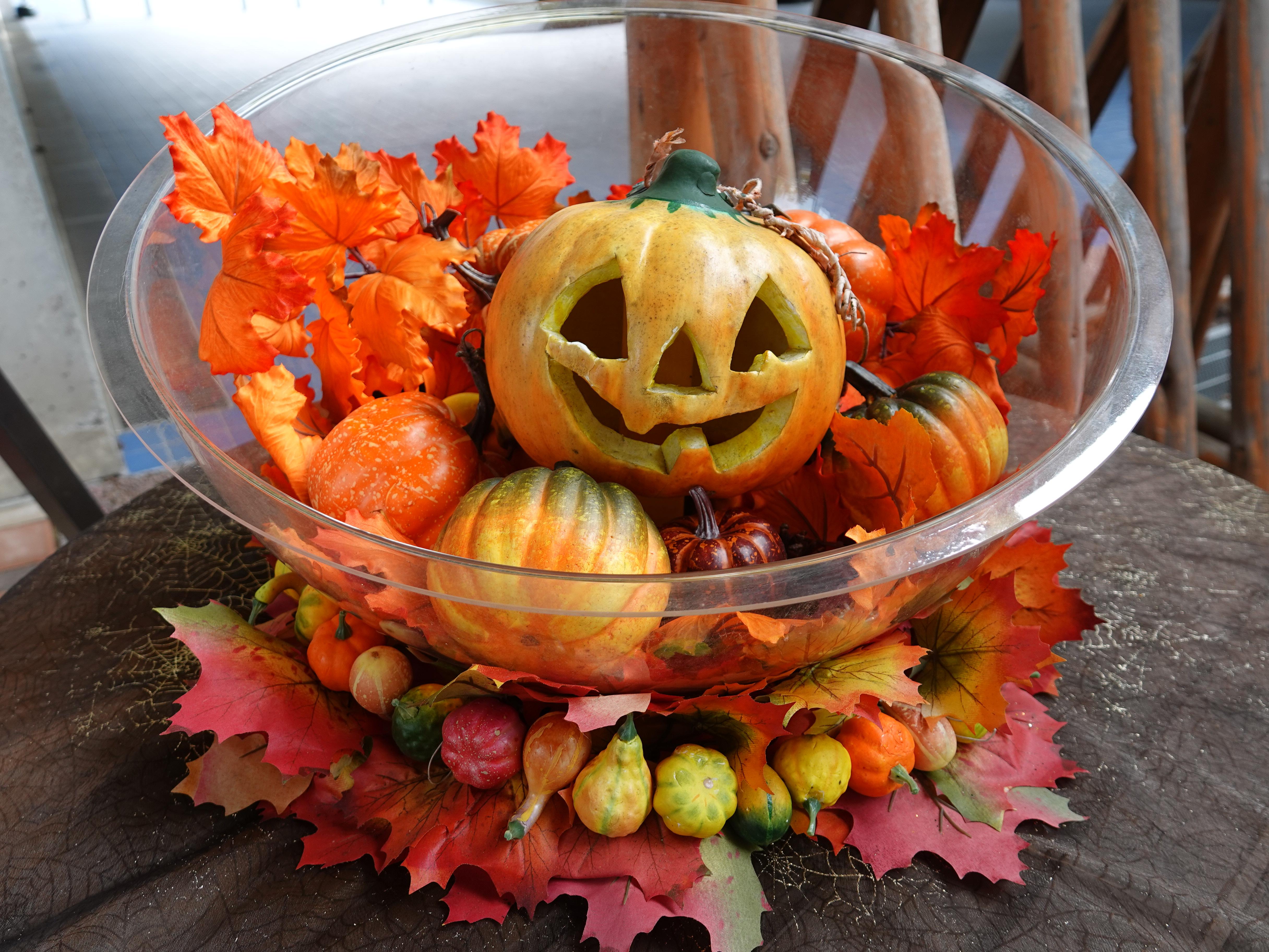 よこはま動物園ズーラシアでは動物にかぼちゃプレゼント!ハロウィン特別ガイドを楽しもう