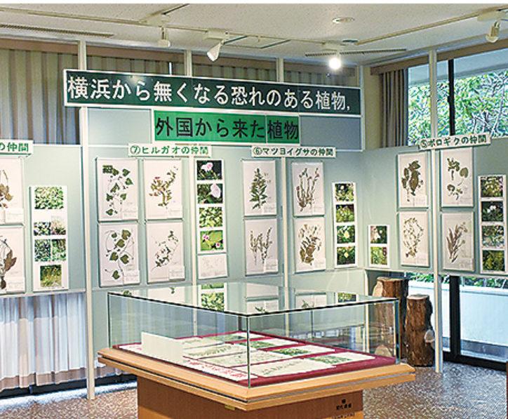 横浜の絶滅植物を学ぶ標本展@こども植物園