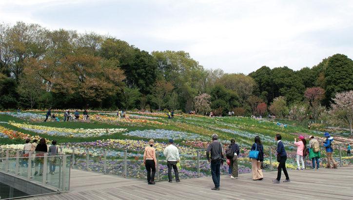 「秋の里山ガーデンフェスタ2018」秋の草花が楽しめる1haの大花壇ほか!