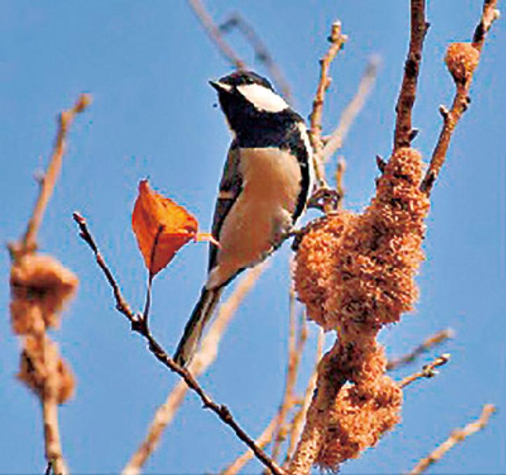 野鳥に詳しい講師と箱根の冬鳥観察を楽しむ!11月23日(祝)開催@箱根やすらぎの森