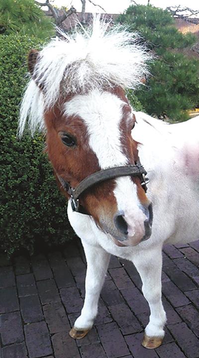 馬とのふれあいや物産展など、毎週末イベントがいっぱい!@JRA ウインズ横浜
