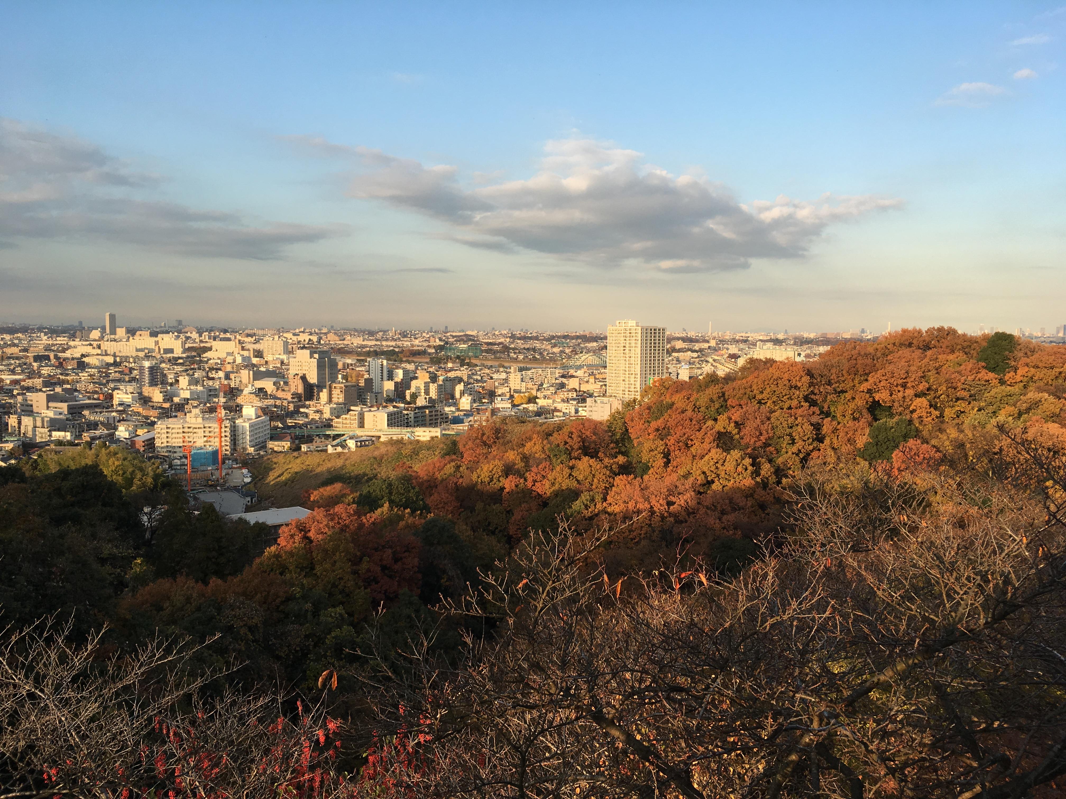 生田緑地で紅葉を満喫「夜の民家園」では紅葉と古民家をライトアップ【川崎市多摩区】
