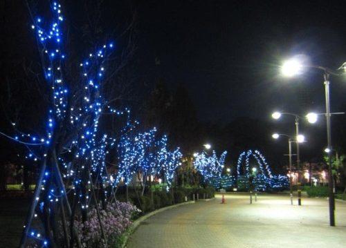 7,000球が光り輝く横山公園イルミネーション@相模原市中央区