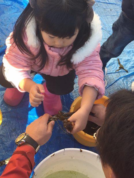 江の島・片瀬漁港でワカメの養殖に挑戦!魚づくしの昼食にクルージング体験も