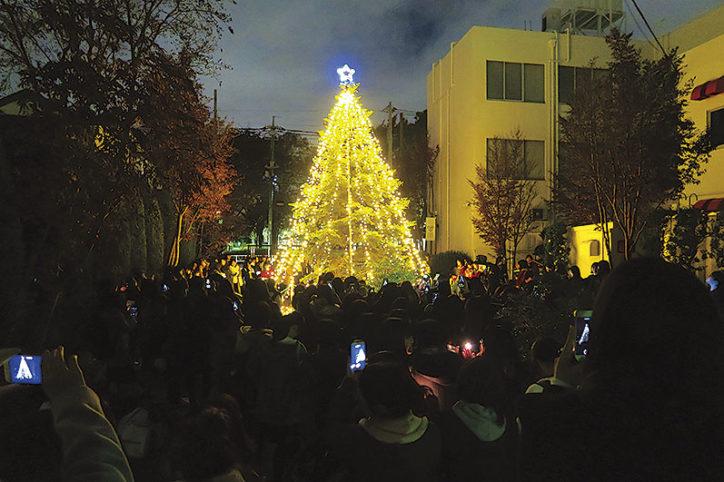 モミの木に光灯る 和泉短期大学イルミネーション2018@相模原市中央区