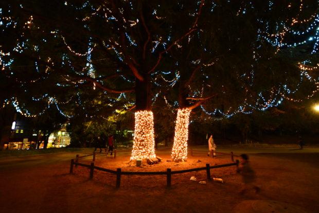 たまプラーザ「美しが丘公園」イルミがパワーアップ!点灯式は朝からイベント開催