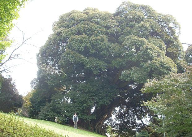 小野神社「木造随身倚像」年に1度の特別公開【東京文化財ウィーク2018】
