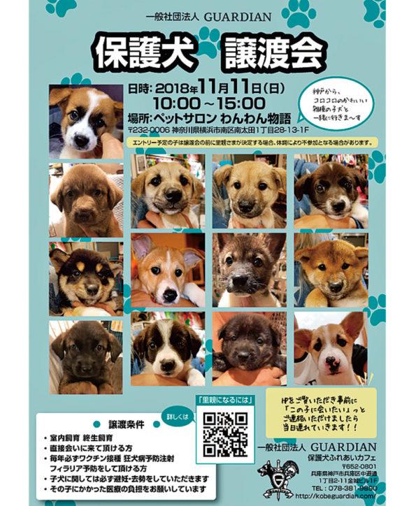 南太田で「GUARDIAN」主催の保護犬譲渡会