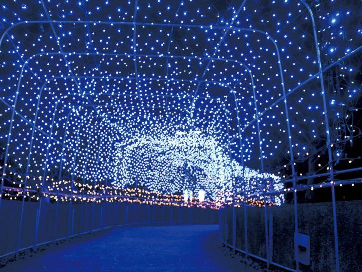2020年はコロナを灯で吹き飛ばす!45,000球が神秘的に輝くイルミネーション【津久井湖城山公園 】